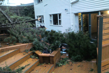 Branches from a neighbouring tree crashed into Sharon's Wellington property (Photo: Sharon Parker/3 News)
