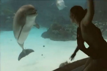 The dolphin becomes captivated by the girl's dancing