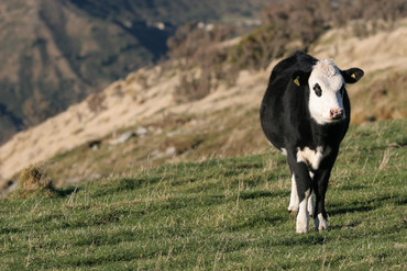 New Zealand red meat exports tot