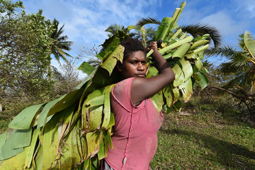 A woman gathers banana leaves to cook with on the remote south-west coast of Tanna Island , Vanuatu (AAP)